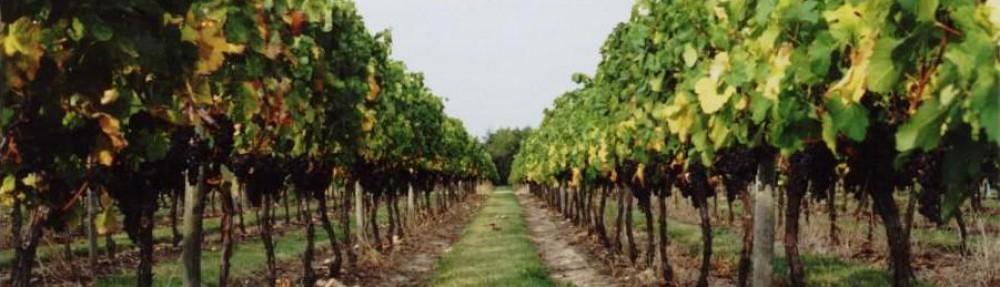 Vignobles Rousselot